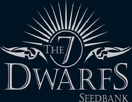 The 7 Dwarfs Seeds