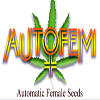 AutoFem Seeds