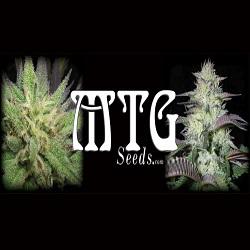 MTG Seeds