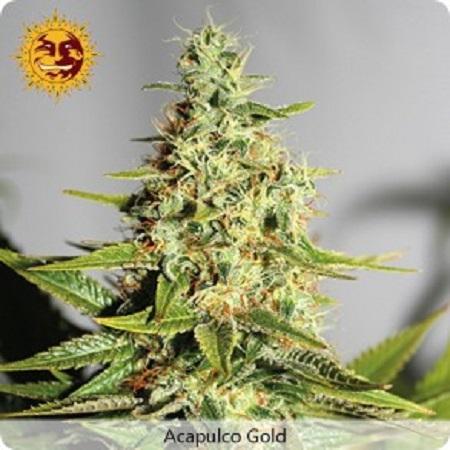 Barney's Farm Seeds Acapulco Gold Feminized (PICK N MIX)