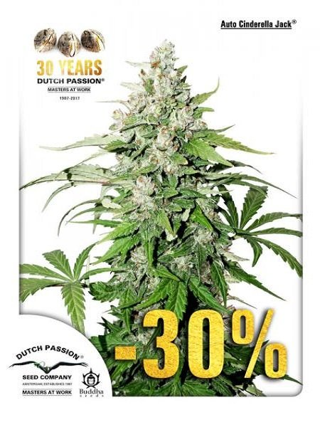 Dutch Passion Seeds Auto Cinderella Jack Feminized (PICK N MIX)