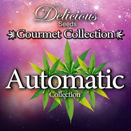 Delicious Seeds Gourmet Auto Mix #2 Feminized