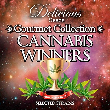 Delicious Seeds Cannabis Winners Mix #1 Feminized
