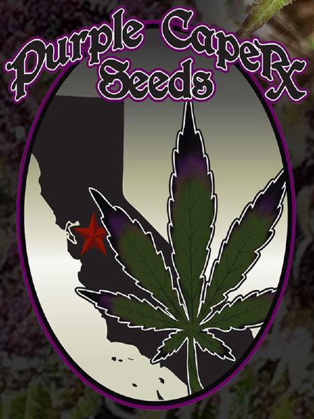 Purple Caper Seeds Grandma's Batch Regular