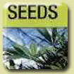 Kulu Seeds - Orange Bud