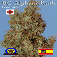 Next Generation Seeds Afghani Kush Feminized