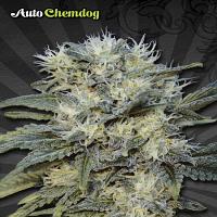 Auto Seeds Auto Chemdog Feminised