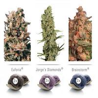 Dutch Passion Seeds Colour Mix #5 Feminized