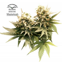 Dutch Passion Seeds Master Kush Feminized
