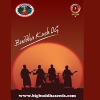 Big Buddha Seeds Buddha Kush OG Feminised