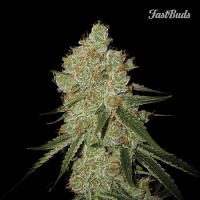 FastBuds Seeds LSD-25 Auto Feminised (PICK N MIX)