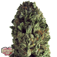 Heavyweight Seeds Budzilla Feminized