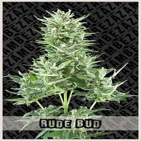 Zambeza Seeds Rude Bud Auto Feminized