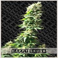 Zambeza Seeds Happy Skunk Feminized