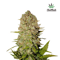 FastBuds Seeds Pineapple Express Auto Feminized