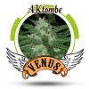 Venus Genetics AKAtombe Feminised