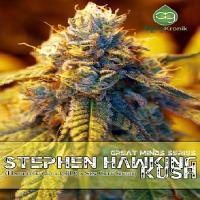 AlphaKronik Genes Seeds Stephen Hawking Kush Regular