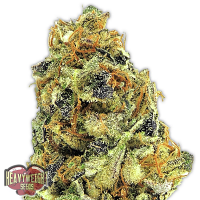 Heavyweight Seeds K.O. Kush Feminized