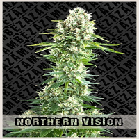 Zambeza Seeds Northern Vision Feminized