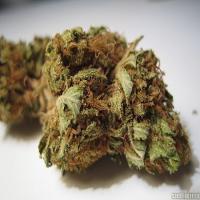Medical Seeds Sour Diesel Feminized