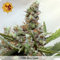 Barney's Farm Seeds CBD Blue Shark Feminized
