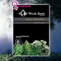 World of Seeds Landrace Sativa Collection Feminized