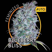 Vision Seeds Blueberry Bliss Auto Feminized