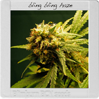 Blimburn Seeds Blimburn Bcn Range Bling-Bling Haze Feminized PICK N MIX