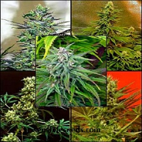 Magus Genetics Seeds Mosaic Female Mix Feminized