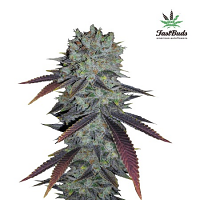 FastBuds Seeds Fastberry Auto Feminized