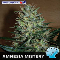 Positronics Seeds Amnesia Mistery Feminized (PICK N MIX)