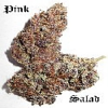 Secret Garden Seeds Pink Salad F5 Auto Regular
