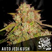 Shortstuff Seeds Auto Jedi kush Feminized
