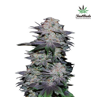 FastBuds Seeds Blackberry Auto Feminised