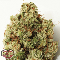 Heavyweight Seeds Green Ninja Feminized