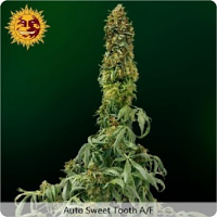 Barney's Farm Seeds Sweet Tooth Auto Feminized  (PICK N MIX)