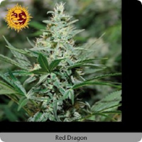 Barney's Farm Seeds Red Dragon Feminised (PICK N MIX)