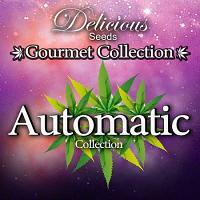 Delicious Seeds Gourmet Auto Mix #1 Feminized
