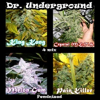 Dr Underground Seeds Surprise Killer Mix Feminized