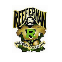Reeferman Seeds Night Nurse Regular