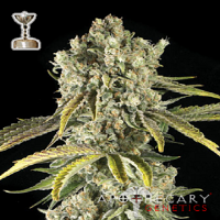 Apothecary Genetics Seeds Tahoe OG Regular