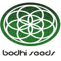Bodhi Seeds Moontang Regular