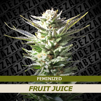 Zambeza Seeds Fruit Juice Feminized
