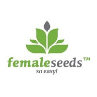 Female Seeds Auto Haze Feminized