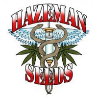 Hazeman Seeds Mystery Girl Regular