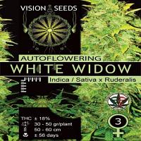 Vision Seeds White Widow Auto Feminized