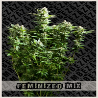 Zambeza Seeds Feminized Mix