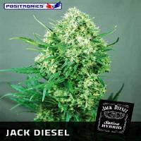 Positronics Seeds Jack Diesel Feminized (PICK N MIX)