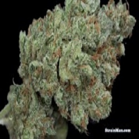 Rare Dankness Seeds Ghost Train Haze #1 Regular