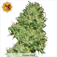 Barney's Farm Seeds Utopia Haze Feminized (PICK N MIX)